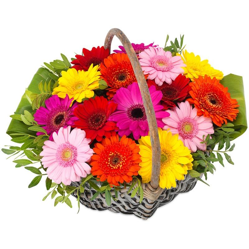 24 база цветов