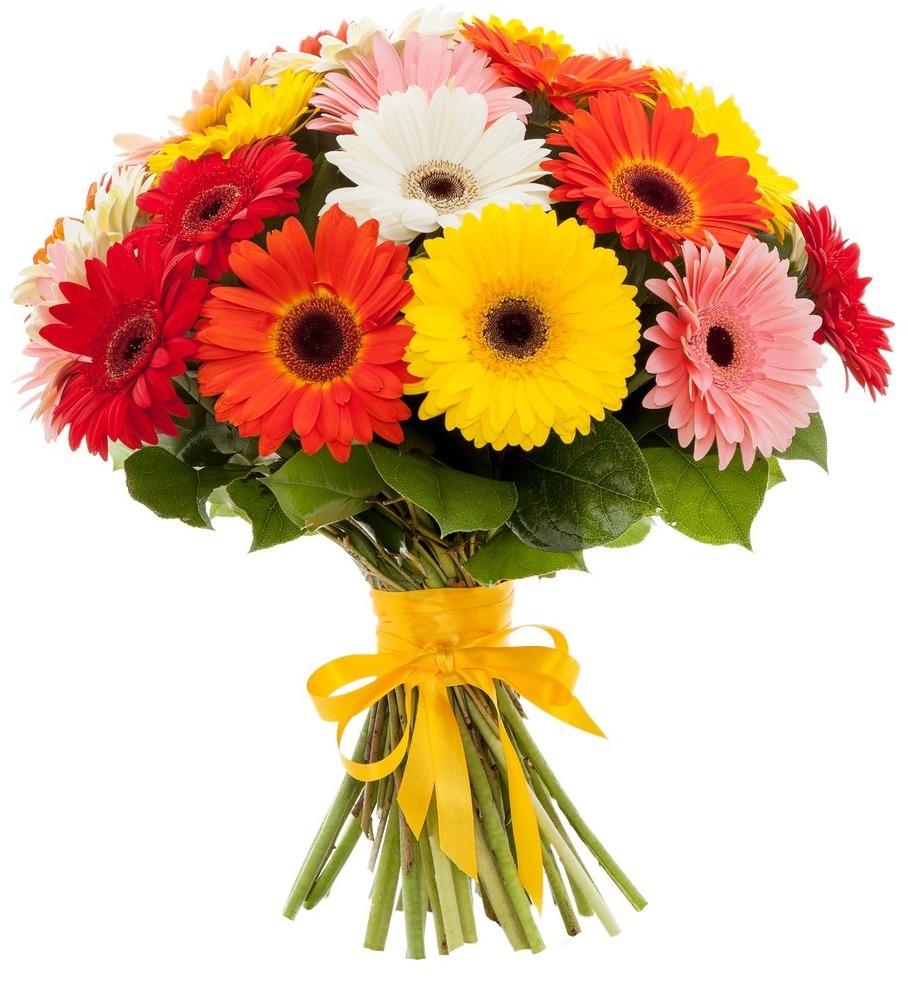 Гербер цветы купить подарок-шутка на юбилей