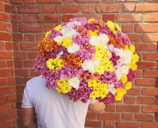 45 хризантем, с бесплатной доставкой по Пскову!