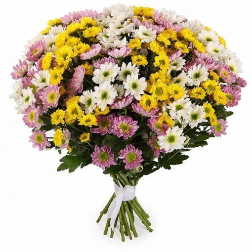 Купить хризантему Псков, букет хризантем Псков, купить цветы Псков, доставка цветов Псков.